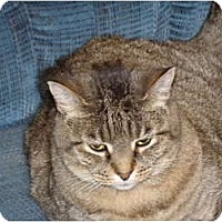 Adopt A Pet :: Remmy-sophisticate - Scottsdale, AZ