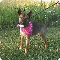 Adopt A Pet :: SHEBA/Summer Special Pricing - Glastonbury, CT