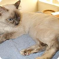 Adopt A Pet :: Polly - Warren, MI