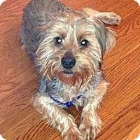 Adopt A Pet :: Scout - Cheyenne, WY