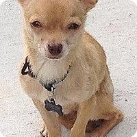 Adopt A Pet :: WOODY - AUSTIN, TX
