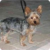 Adopt A Pet :: Henley - Gulfport, FL
