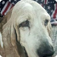Adopt A Pet :: Doreen - Acton, CA