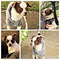 Adopt A Pet :: Stixx - Millersville, MD