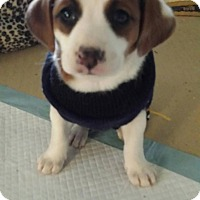 Adopt A Pet :: Inspiration - Scottsdale, AZ