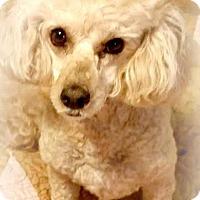 Adopt A Pet :: Buddy - Essex Junction, VT