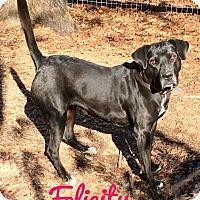 Adopt A Pet :: Felicity - Milton, GA