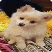 Adopt A Pet :: MOBIE - Plano, TX