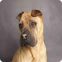 Adopt A Pet :: JUN - Murray, UT