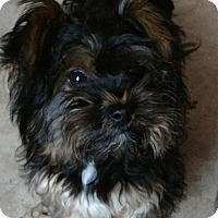 Adopt A Pet :: Dolly - San Diego, CA