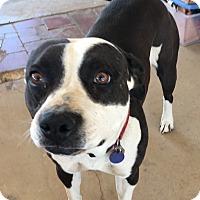 Adopt A Pet :: Molly - Santa Ana, CA