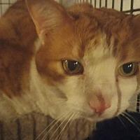 Adopt A Pet :: Gizmo (& Bandit) - Herndon, VA