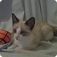 Adopt A Pet :: Zen - Phoenix, AZ