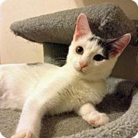 Adopt A Pet :: Ishka - Fitchburg, WI