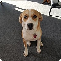 Adopt A Pet :: Jezzy - Rexford, NY