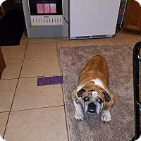 Adopt A Pet :: Bubbles - E. Greenwhich, RI