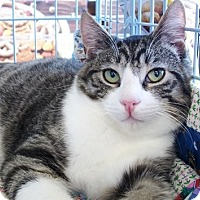 Adopt A Pet :: Oscar - Castro Valley, CA