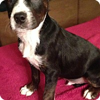 Adopt A Pet :: MJ - Boston, MA