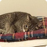 Adopt A Pet :: Toby - Columbia, MD