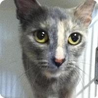 Adopt A Pet :: Mae - Hamilton, ON