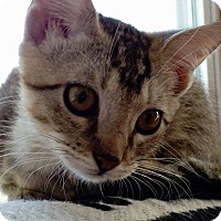 Adopt A Pet :: Meilani - St. Louis, MO