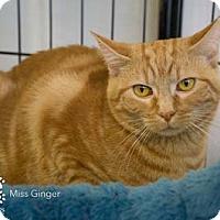 Adopt A Pet :: Ginger - Merrifield, VA