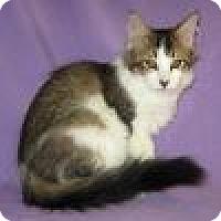 Adopt A Pet :: Dooley - Powell, OH