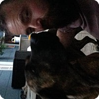 Adopt A Pet :: Sophia - Chambersburg, PA