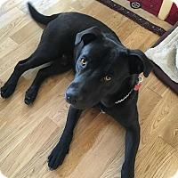 Adopt A Pet :: Bronx - Beverly Hills, CA