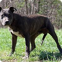 Adopt A Pet :: Samuel - Waldorf, MD