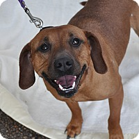 Adopt A Pet :: Kate - Atlanta, GA