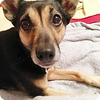 Adopt A Pet :: Sadie - E. Greenwhich, RI