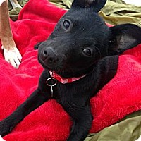 Adopt A Pet :: Mr. Pierre Bates - Santa Monica, CA