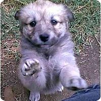 Adopt A Pet :: Demetrie - dewey, AZ