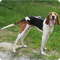 Adopt A Pet :: Calvin SUPER SWEET - Antioch, IL