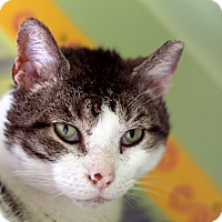 Adopt A Pet :: Clement - Chicago, IL