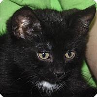 Adopt A Pet :: Mr.Man - Calgary, AB