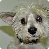 Adopt A Pet :: Bailey - Meridian, ID