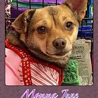 Chihuahua Mix Dog for adoption in Bogalusa, Louisiana - Momma June