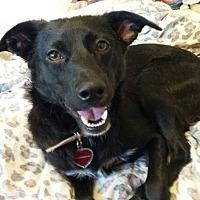 Adopt A Pet :: Lillah - Alhambra, CA