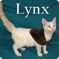 Adopt A Pet :: Lynx - Jackson, MS