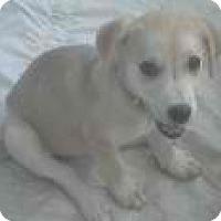 Adopt A Pet :: buttered popcorn - Phoenix, AZ