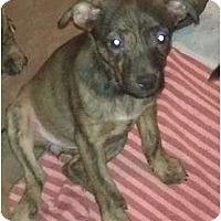 Adopt A Pet :: Bettina - Phoenix, AZ