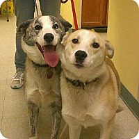 Adopt A Pet :: Mia and Kisses - Ridgely, MD