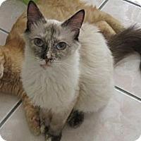 Adopt A Pet :: Calisa - Los Angeles, CA