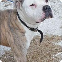 Adopt A Pet :: Sarge - Orlando, FL