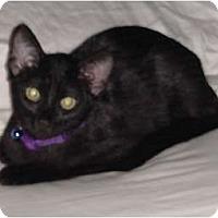 Adopt A Pet :: Savannah - Franklin, NC