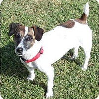 Adopt A Pet :: QUEENIE - Phoenix, AZ