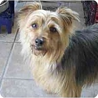 Adopt A Pet :: Reese-Ready! - Commerce TWP, MI