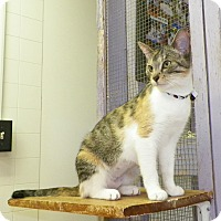 Adopt A Pet :: Twiggy - Dover, OH